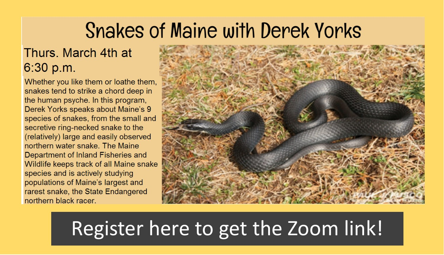 Snakes of Maine Presentation